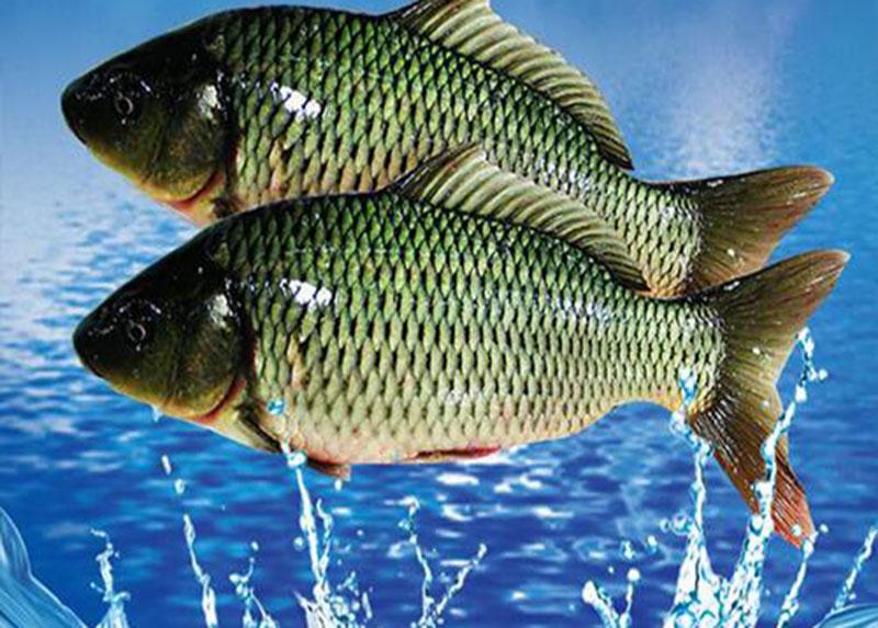生态水产鱼