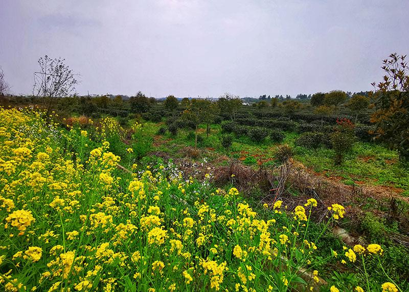 红安花植观赏